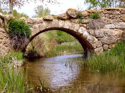 La enfermedad como puente